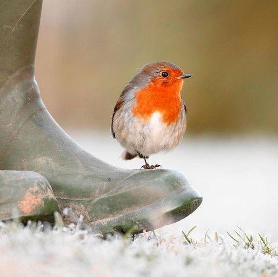віршики про зиму для малят