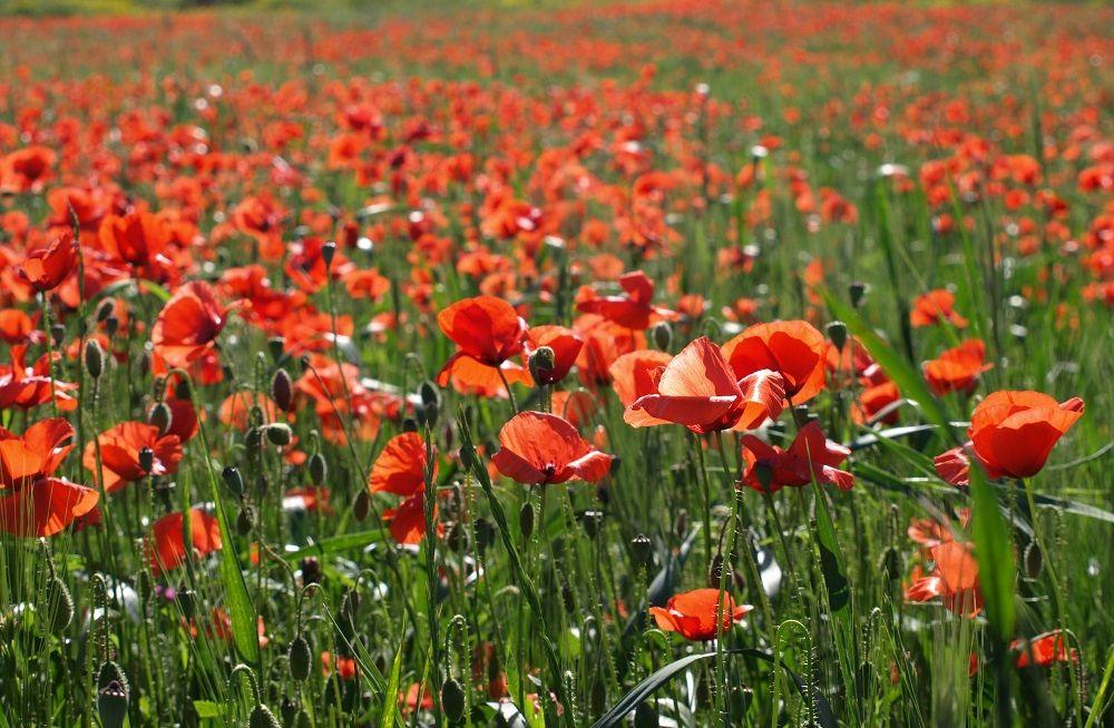 Никто не забыт: 10 бессмертных стихов о войне, победе и любви.