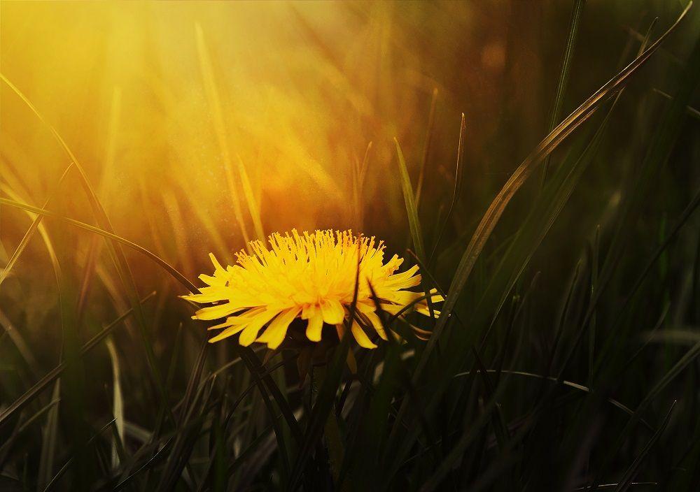 Сотканные из солнца: цитаты про лето от мастеров слова.