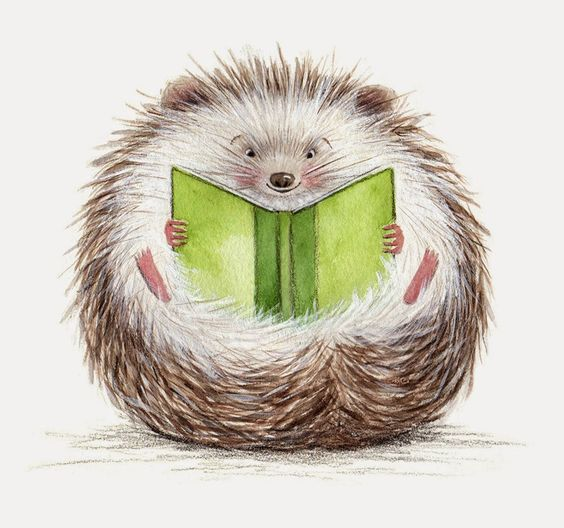 hedgehog reading funny picture