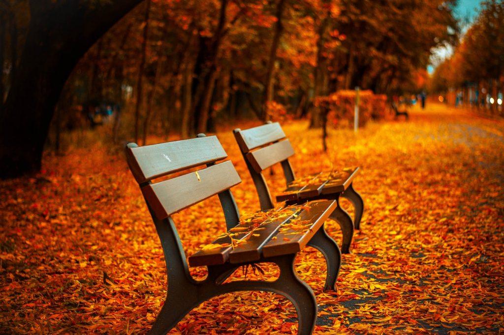 15 затишних віршів про осінь від українських поетів