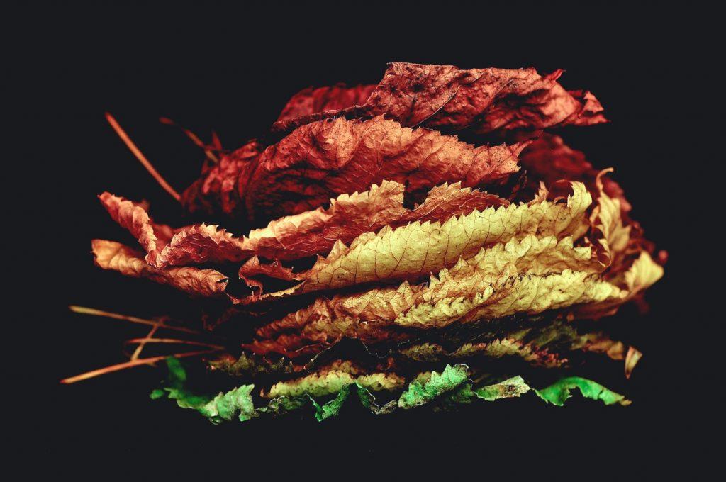 українська поезія про осінь