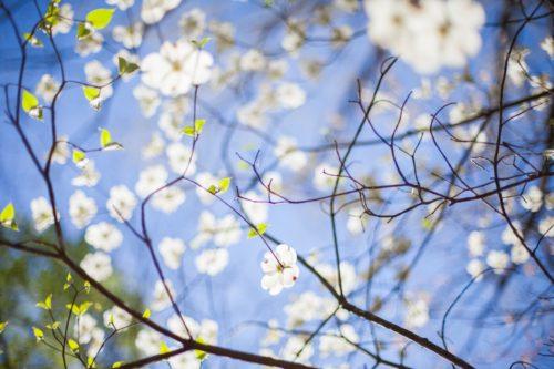 Весенняя свежесть: душевные стихи о весне