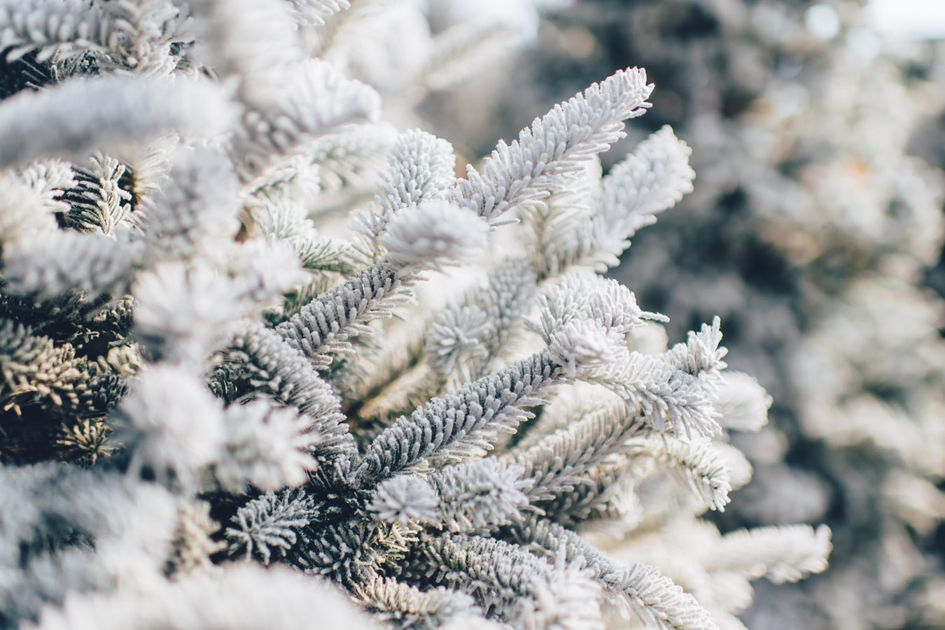 Зимнее настроение: уютные книжные цитаты о зиме