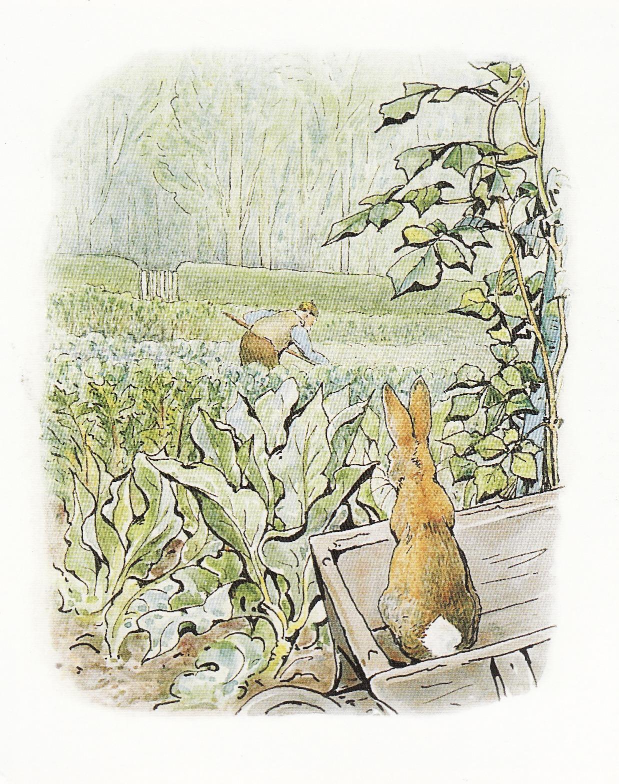 illustration art children book beatrix potter