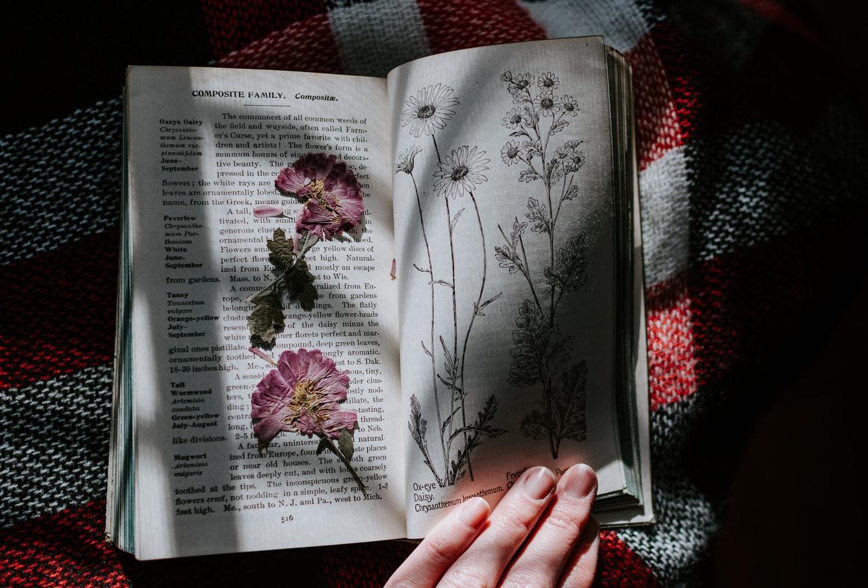 стихи русская поэзия